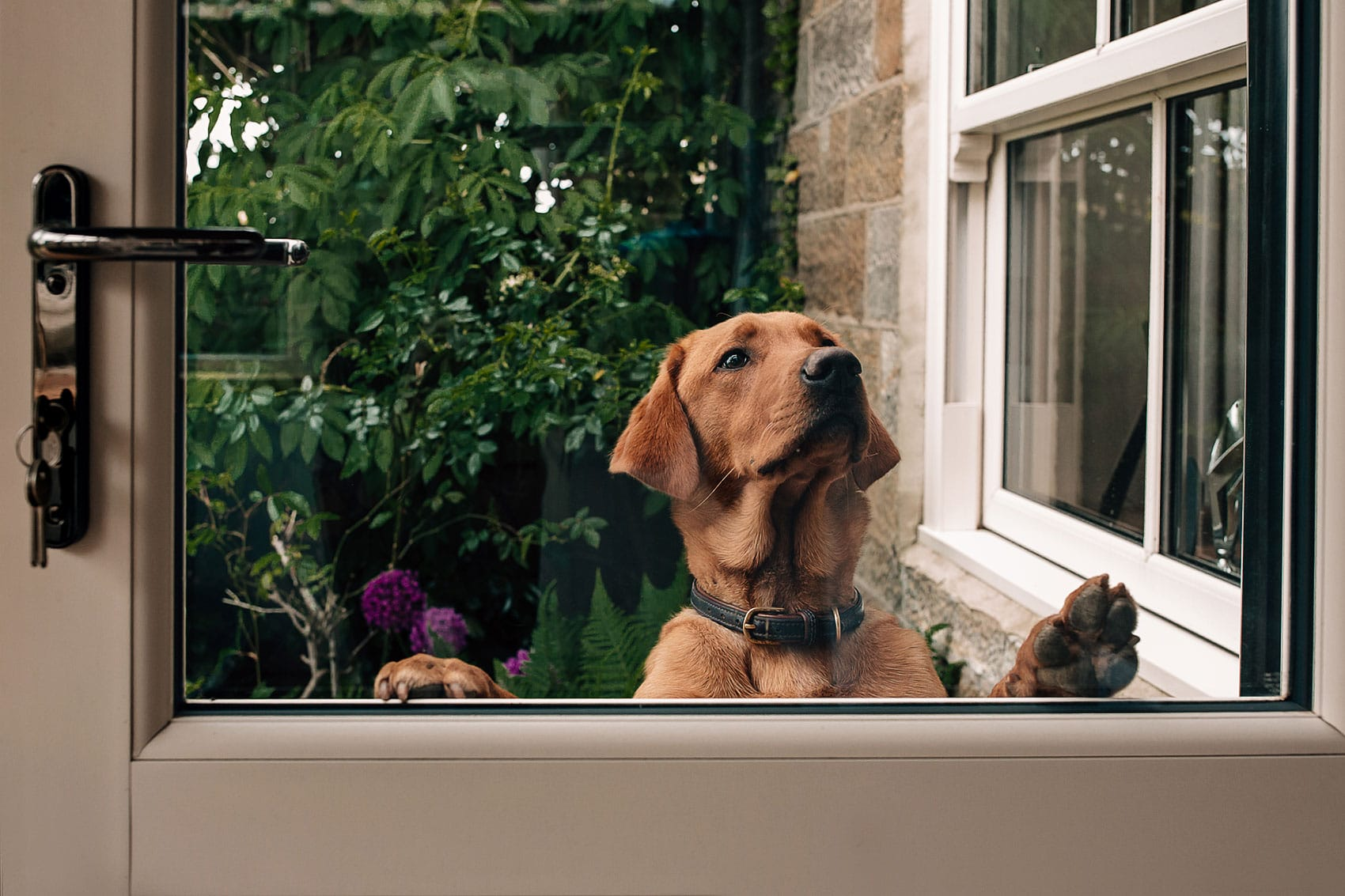 pets at weddings photography Yorkshire